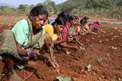 Women work on a small farm in Orissa, India. (2006 IDEI, Courtesy of Photoshare)
