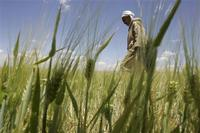 A 2010 law imposes tight restrictions on foreign investment in farmland in Algeria.