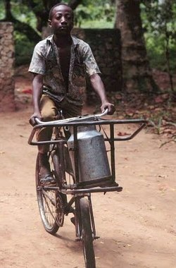 Bringing milk to market in Kenya