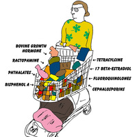 Click to enlarge: transatlantic shopping cart. (Credit: Martha Rosenberg)