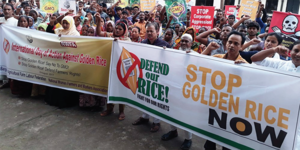 Global solidarity action against the commercialisation of Golden Rice in Bangladesh.