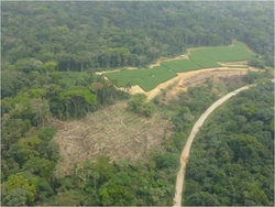 Herakles Farms plans to clear and replace 800 square kilometers of rainforest and agricultural land with mono-culture trees to establish an oil palm plantation on the homelands of the Oroko, Bakossi, and Upper Bayang peoples in the Ndian, Koupé-Manengouba, and Manyu divisions of Cameroon with major impacts on approximately 52,000 Indigenous peoples in 88 villages. Source: Cultural Survival (Photo: Save Wildlife)