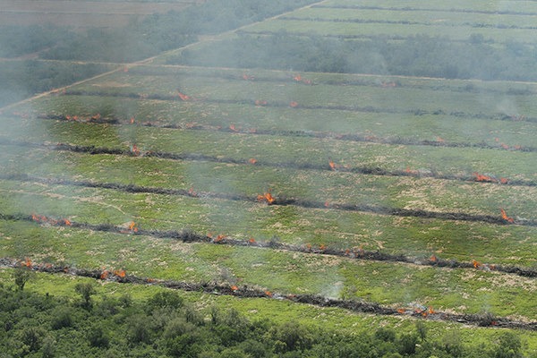 Burning freshly-felled trees near Mariscal Estagarribia, in the Boqueron region of Paraguay. (Photo: Glyn Thomas / FoE)