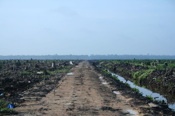 Clear cut to make way for an oil palm plantation in Sumatra, Indonesia. (Photo: H Dragon/Flickr)