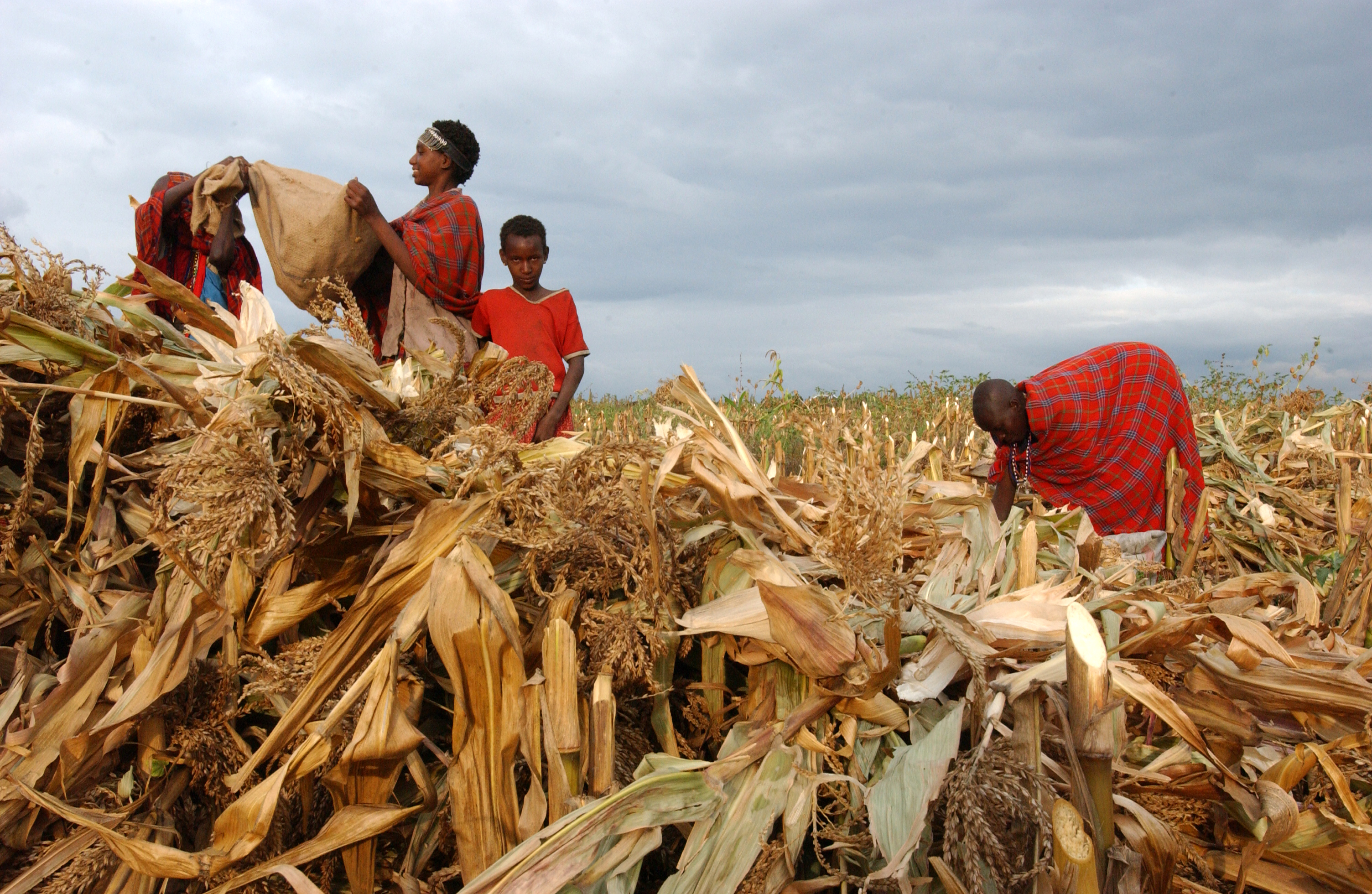 GRAIN — Hungry for land: small farmers feed the world with less than ...