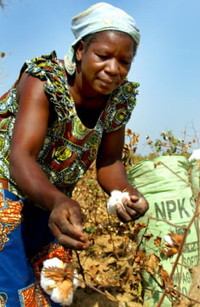 A new Green Revolution for Africa?-image