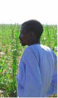Saudi investors poised to take control of rice production in Senegal and Mali?-image