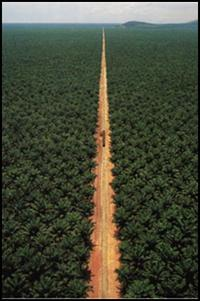 "The ""greening"" of a shady business – Roundtable for Sustainable Palm Oil-image"