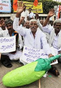 Indian farmers organise to stop Bt brinjal-image