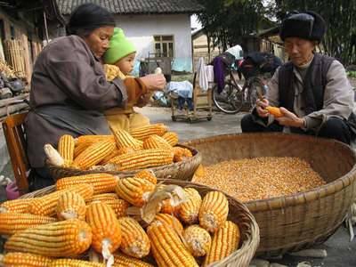 Who will feed China: agribusiness or its own farmers? Decisions in Beijing echo around the world-image