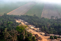 Land grabbing for biofuels must stop-image