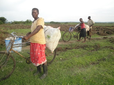 Harvest of hardship: Yala Swamp land grab destroys Kenyan farmers' livelihoods-image
