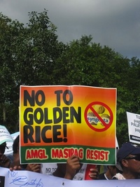 Golden Rice is unnecessary and dangerous-image