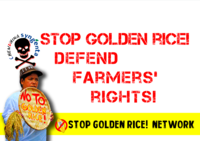 Civil society decries FSANZ approval of Golden Rice-image