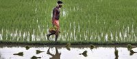 Hungry for land: small farmers feed the world with less than a quarter of all farmland-image