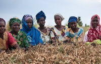 Seed laws that criminalise farmers: resistance and fightback-image