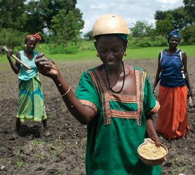 The real seeds producers: Small-scale farmers save, use, share and enhance the seed diversity of the crops that feed Africa-image