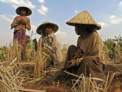 RCEP trade deal will intensify land grabbing in Asia-image