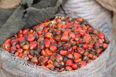 Industrial palm oil investors struggle to gain foothold in Africa-image