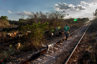 "The misnamed ""Mayan Train"" :  Multimodal land grabbing-image"