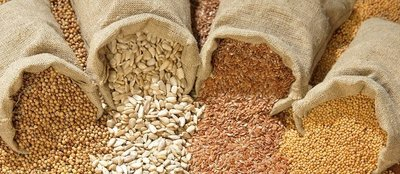 Corporate capture of seed is jeopardising farmers-image